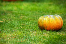 Orange And Green Pumpkin On Green Grass. Colorful Autumn Thanksgiving Background With Copy Space For Your Text.