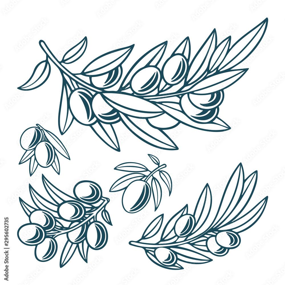 Fototapety, obrazy: Olive. Olive hand drawn vector illustrations set. Part of set.