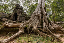 Lost In The Forest The Small Ta Nei Temple Attract A Few Visitors, Siem Reap, Cambodia
