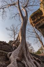 "Ta Prohm Aka ""Angelina Jolie's "" Temple, Siem Reap Province, Cambodia"