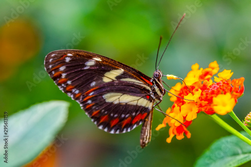 Photo sur Aluminium Papillon Beautiful butterfly sitting on flower in a summer garden