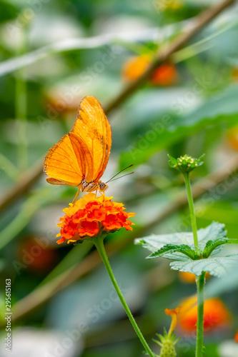 Deurstickers Vlinder Beautiful butterfly sitting on flower in a summer garden