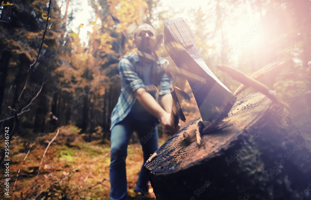 Fototapety, obrazy: Male worker with an ax chopping a tree in the forest.