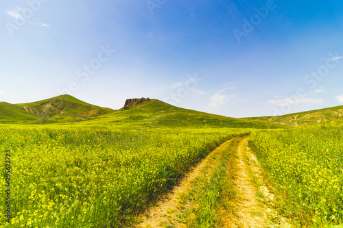 Poster Pistachio Large green field with a center road and bushes. Beautiful view of field with blue sky