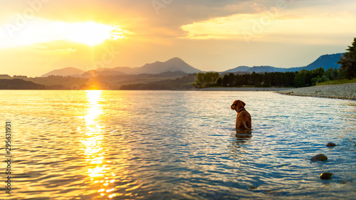 Foto Gorgeous family pet dog on a beach at sunset