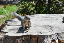 Squirrel In Yosemite National ...