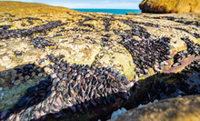 Unusual Background Of Mussels, Stones, Algae And Water Made By Nature On The Ocean