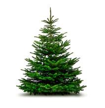 Grüne Wehnachtsbäume Isolier...