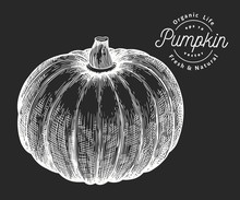 Pumpkin Illustration. Hand Drawn Vector Vegetable Illustration On Chalk Board. Engraved Style Halloween Or Thanksgiving Day Symbol. Vintage Food Illustration.