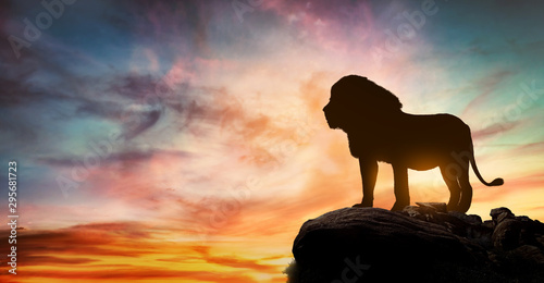 Fototapety, obrazy: African sunset with the silhouette of a large adult lion above a rock