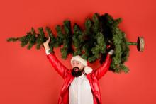 Winter Holidays. Christmas Decor Concept. Christmas, New Year, Holidays. Santa Man Carrying Christmas Tree. Pine Tree. Santa Claus Costume. Bearded Man In Costume Of Santa Claus With Christmas Tree.
