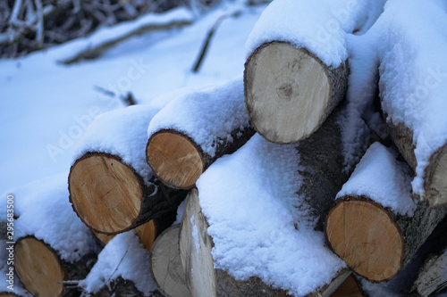 Poster Firewood texture Winter landscape with harvesting firewood in the forest. Forest sawmill and logs covered with snow. Stock photo for design