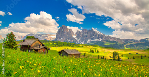 Foto op Canvas Bomen Alpe di Siusi - Seiser Alm with Sassolungo - Langkofel mountain group in background at sunset. Yellow spring flowers and wooden chalets in Dolomites, Trentino Alto Adige, South Tyrol, Italy, Europe