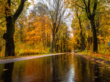 Road In The Autumn Forest In R...