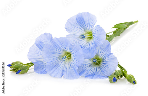 flax flowers isolated on white - 295689346