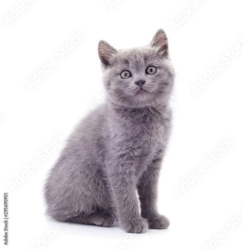 Photo Little gray kitten .