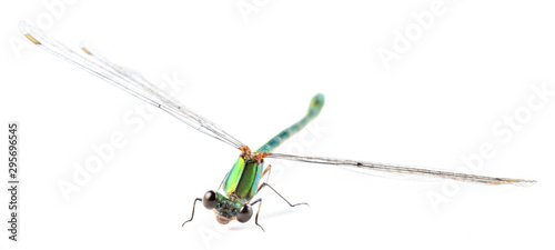 Fotografia Beautiful dragonfly with wings isolated on white background