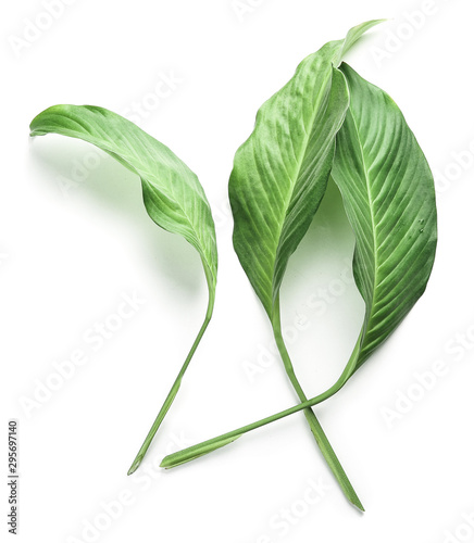Fototapeta Fresh tropical leaves on white background obraz na płótnie