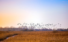 Flock Of Birds Flying In Rich ...