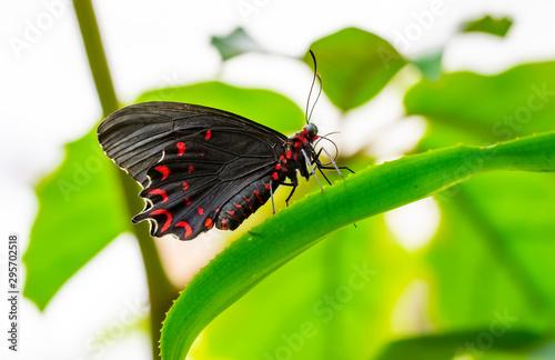 Deurstickers Vlinder Closeup beautiful butterfly & flower in the garden.