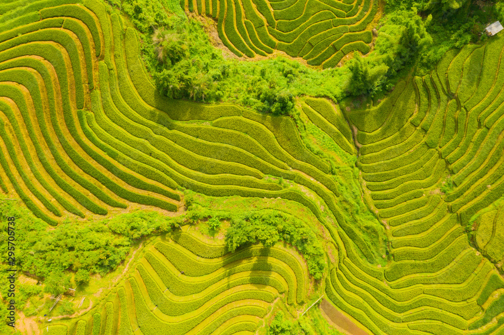 Fototapety, obrazy: Aerial top view of paddy rice terraces, green agricultural fields in countryside or rural area of Mu Cang Chai, Yen Bai, mountain hills valley at sunset in Asia, Vietnam. Nature landscape background.