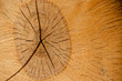 canvas print picture - Oak age rings on the end of the log; wood texture; shallow depth of field