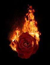 Burning Red Rose, Dark Atmosph...