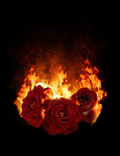 Burning Red Rose, Dark Atmosph...