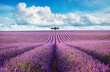 lavender field with tree with cloudy sky