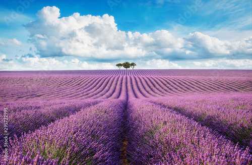 Spoed Fotobehang Bloemenwinkel lavender field with tree with cloudy sky