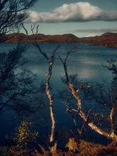 Blue Lake Through Trees