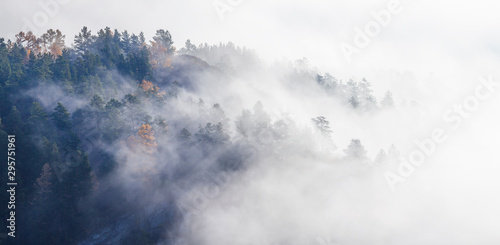 Foto auf Gartenposter Weiß Scenic autumn view. Fog in the forest, view from above. Natural background.