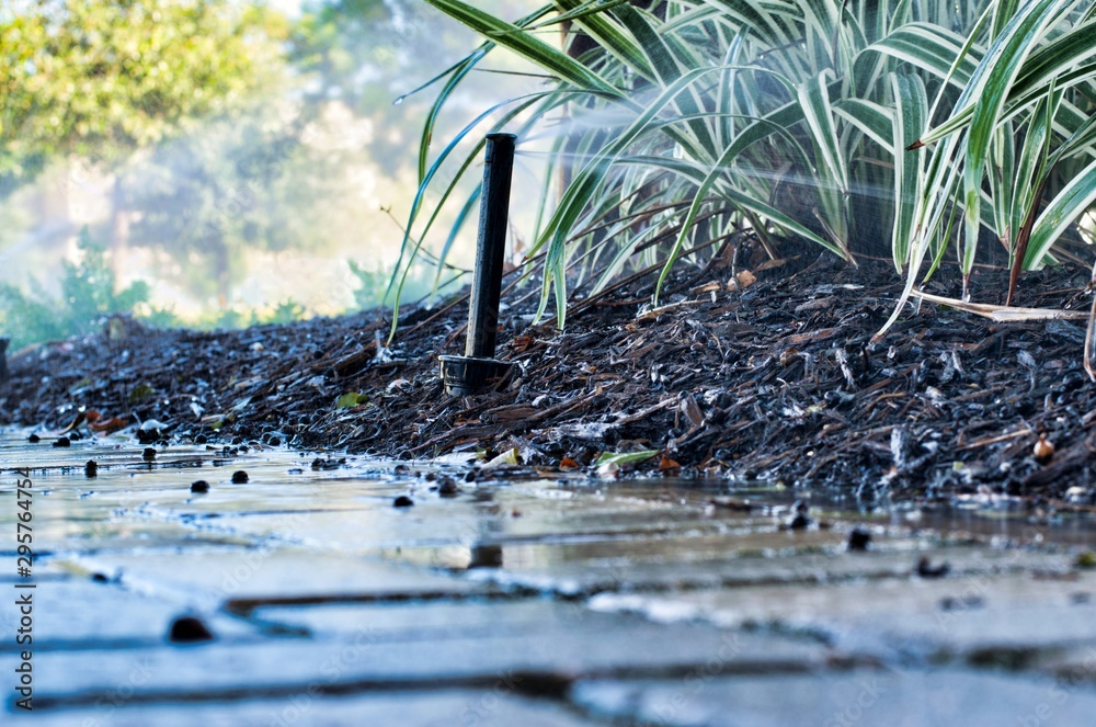 Fototapety, obrazy: Fertilized garden plants being watered by a vertical sprinkler head as seen from ground level with wet brick pavers in the foreground.