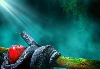 Crna zmija s plodom jabuke u grani drveta