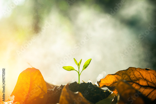 The seedling are growing in the soil with the backdrop of the sun or sunlight. / Wherever the tree is planted, everyone will benefit from it. The worldwide platform to plant trees. - 295772302