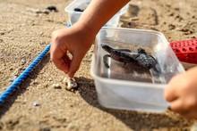 Tiny Baby Turtle On The Beach