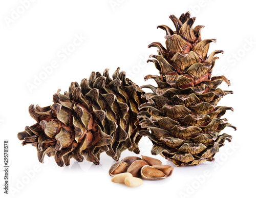 Cedar cones and nuts isolated on white background.