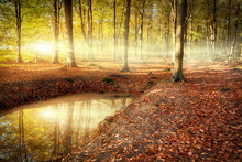 Autumn Forest Sunrise With Pon...
