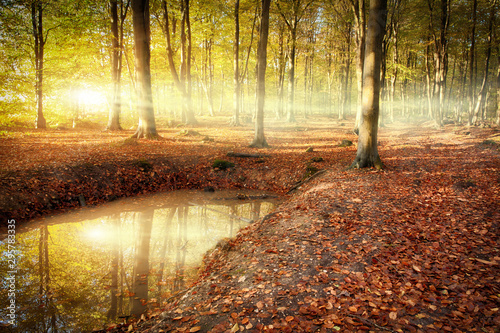 Tuinposter Zonsondergang Autumn forest sunrise with pond reflection