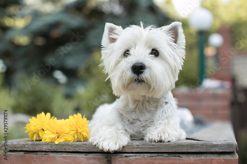 Obraz dog in the garden - fototapety do salonu