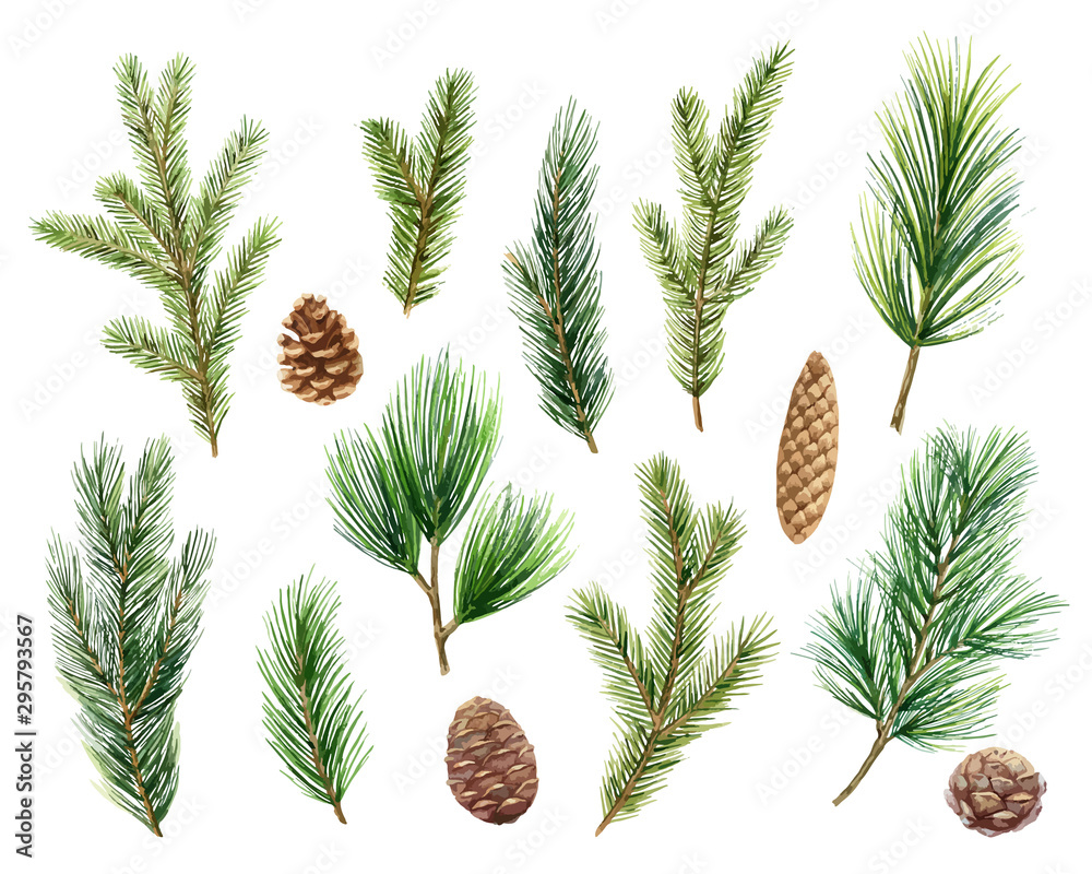 Fototapeta Christmas vector set with green pine branches and cones.
