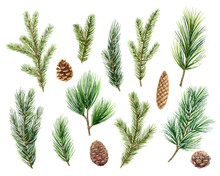 Christmas Vector Set With Green Pine Branches And Cones.