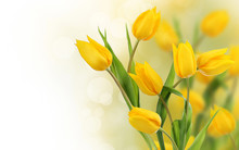 Bouquet Of Yellow Tulips On Wh...