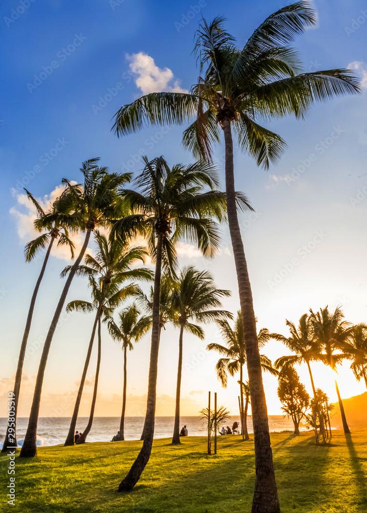 Fototapety, obrazy: palm trees on beach of Grand'Anse, Réunion Island