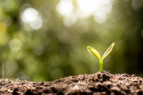 Fotografia, Obraz  The seedlings are growing from the soil.
