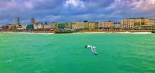 Seagull Near The Shore Of Brighton Beach