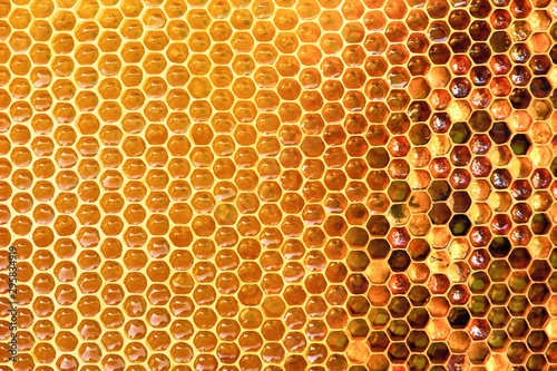 Background texture and pattern of a section of wax honeycomb from a bee hive fil Wallpaper Mural