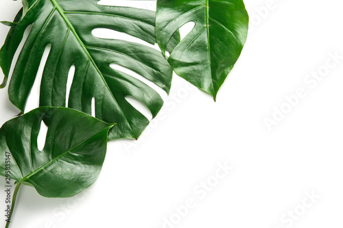 Fototapeta Fresh tropical leaves on white background obraz