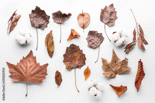 Foto auf Gartenposter Baume Autumn leaves and cotton flowers on white background