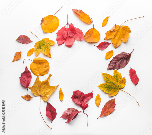 Fototapeta Frame made of autumn leaves on white background obraz
